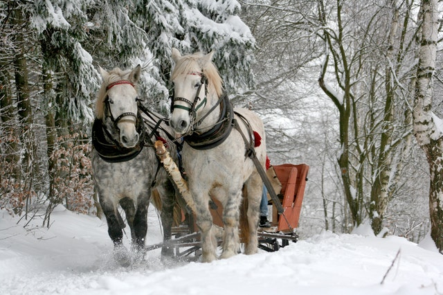 sleigh ride #bucketlist