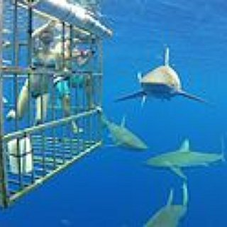 BucketList + Sharkdive In South Africa