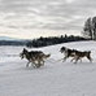 BucketList + Ride On A Dog Sled