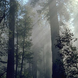 BucketList + Go To A Redwood Forest