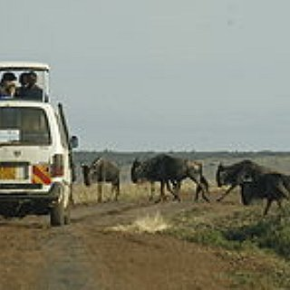BucketList + Go On A Safari In Kenya