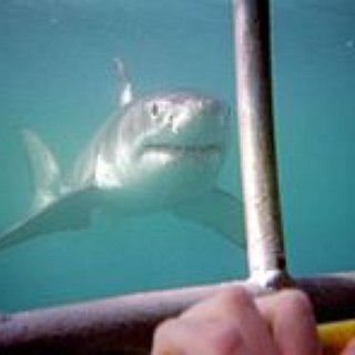 BucketList + Have A Great White Shark Encounter In South Africa.