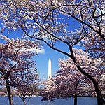 BucketList + See The Cherry Blossoms In ... = ✓