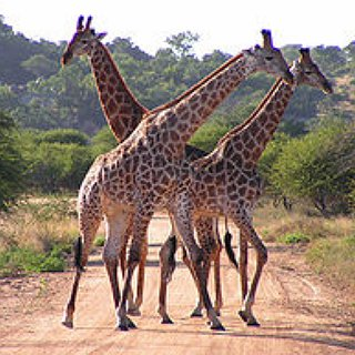 BucketList + Hang Out With Giraffes In South Africa