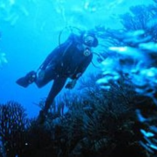 BucketList + Get Scuba Certification