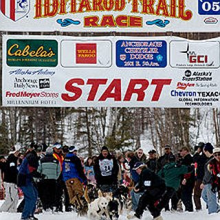 BucketList + See The Iditarod Dog Sled Race