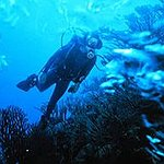 My life goal is... want to go scuba diving, ...