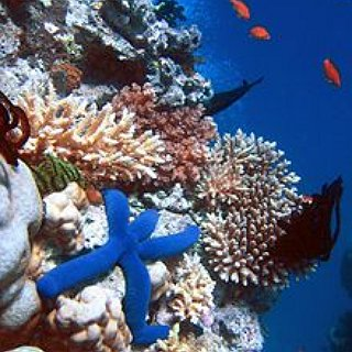 BucketList + To Snorkel At The Great Barier Reef