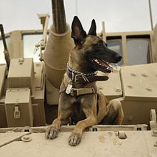 BucketList + Adopt A Mwd From Retirement