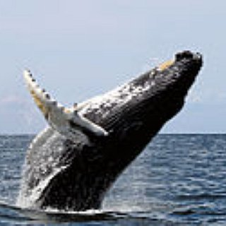 BucketList + Watch Wild Whales