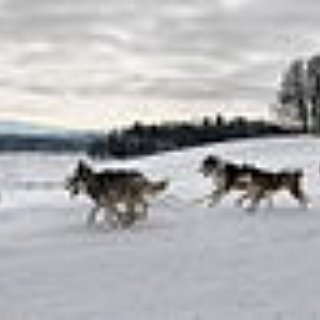 BucketList + Dog Sled In Finland