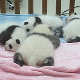 BucketList + Before I Die, I Want To Hold A Baby Panda