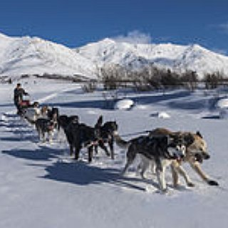BucketList + Dog Sledding In Alaska