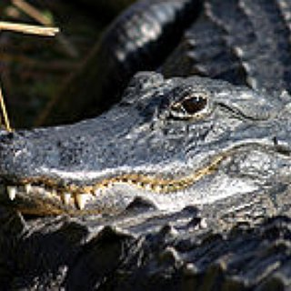 BucketList + Airboat Across An Alligator Infested Swamp