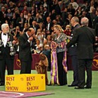 BucketList + Attend The Westminster Dog Show