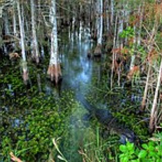 BucketList + Visit Everglades National Park